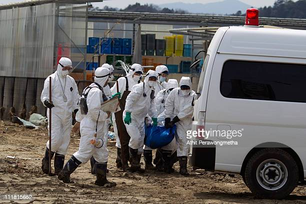 Japanese Police wearing protective suits carry a tsunami victim in a tarp within the exclusion zone about 12 miles away from Fukushima Nuclear Power...