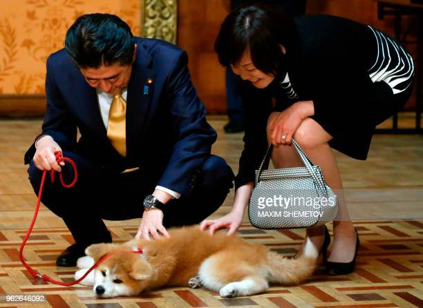 Japanese Prime Minister Shinzo Abe and his wife Akie Abe are seen petting an Akita Inu puppy named Masaru during their official visit to Moscow...