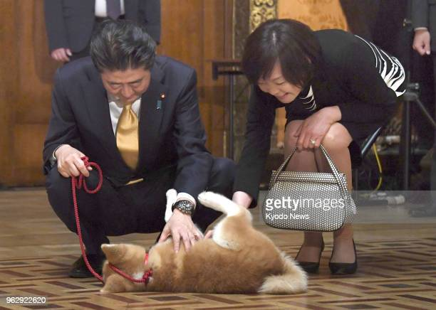 Japanese Prime Minister Shinzo Abe and his wife Akie fondle an Akita puppy in Moscow on May 26 2018 The puppy was offered to Russian Olympic figure...