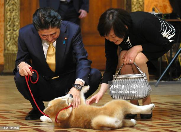 Japanese Prime Minister Shinzo Abe and his wife Akie pat 'Masaru' Akita inu dog prior to present to Pyeongchang Olympic Figure Skating Ladies Singles...
