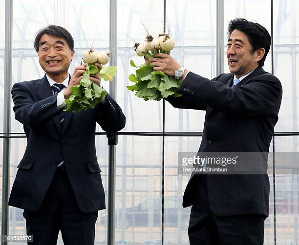 Japanese Prime Minister Shinzo Abe and Restoration Minister Takumi Nemoto holds turnips during their inspection on March 24 2013 in Koriyama...