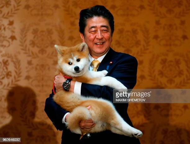 Japanese Prime Minister Shinzo Abe holds an Akita Inu puppy named Masaru in his arms during his official visit to Moscow Russia on May 26 2018...