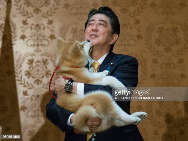TOPSHOT Japanese Prime Minister Shinzo Abe holds an Akita Inu puppy named Masaru in his arms during his official visit to Moscow Russia on May 26...
