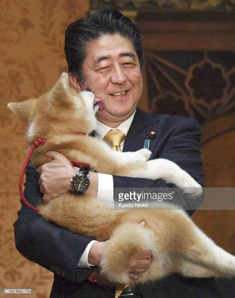 Japanese Prime Minister Shinzo Abe holds an Akita puppy in Moscow on May 26 2018 The puppy was offered to Russian Olympic figure skating champion...