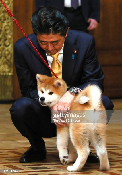 Japanese Prime Minister Shinzo Abe holds 'Masaru' Akita inu dog presented to Pyeongchang Olympic Figure Skating Ladies Singles gold medalist Alina...