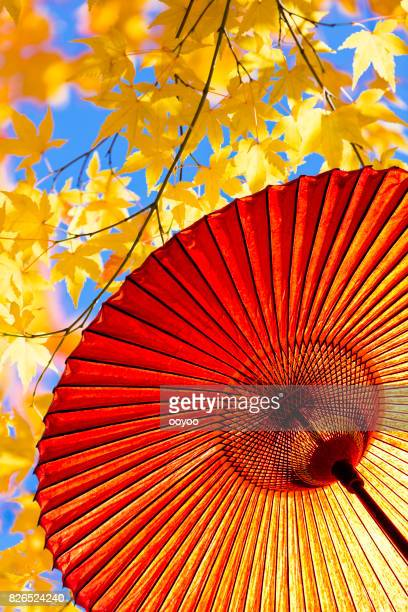 Japanese Red Umbrella And Japanese Maple leaves in Autumn