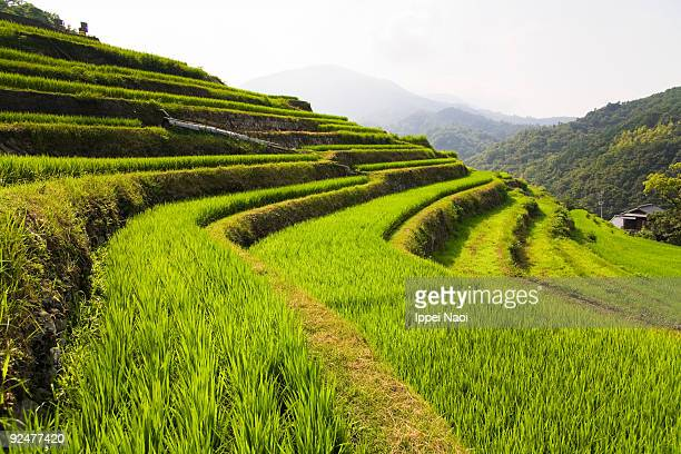 japanese rice terrace paddies in the mountains - reisterrasse stock-fotos und bilder