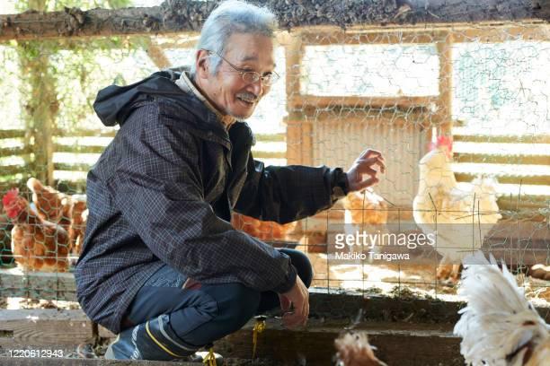 Japanese senior farmer on his farm