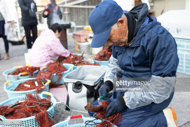 漁場錦でイセエビと貝類を集める日本の先輩 - 伊勢志摩 ストックフォトと画像