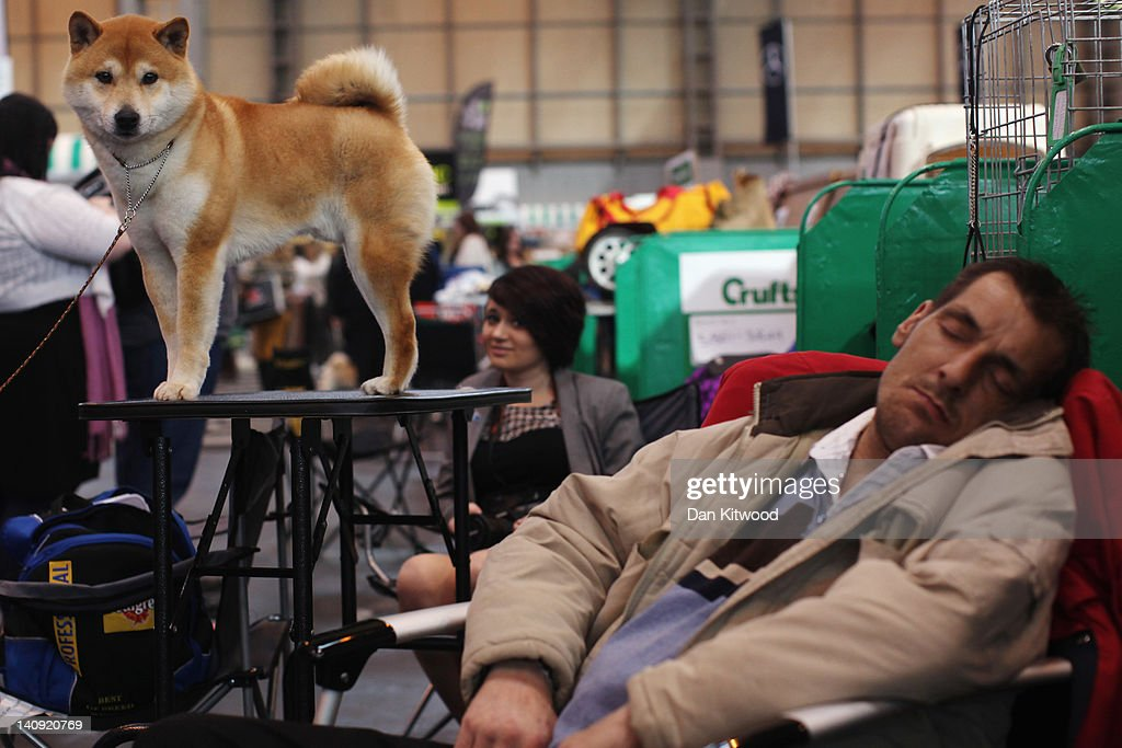 Dogs And Owners Gather For 2012 Crufts Dog Show : Nachrichtenfoto