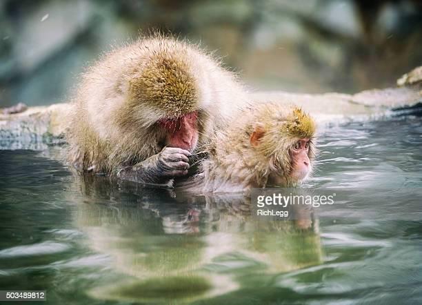 Japanische Snow Monkey Mutter in der Wildnis