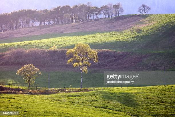 japanese spring - iwate prefecture stock pictures, royalty-free photos & images
