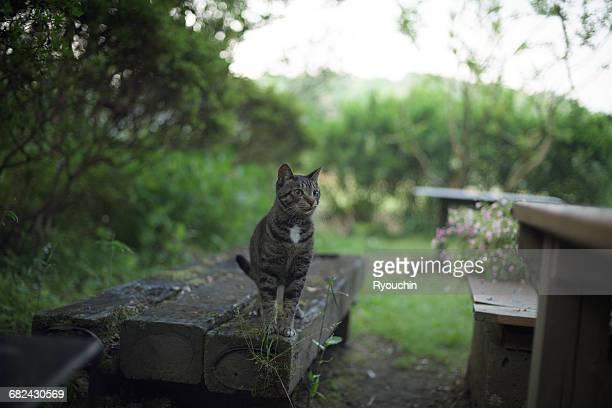 Japanese style, cat