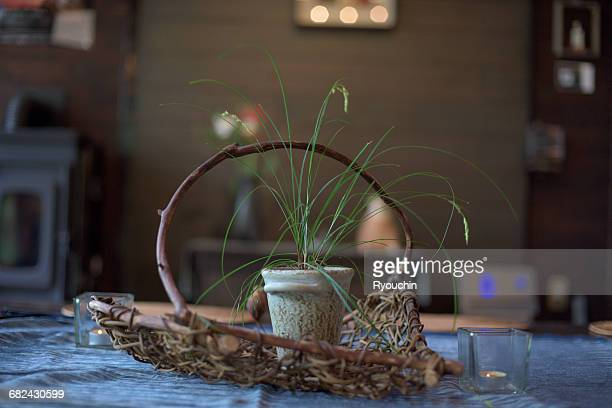 Japanese style, Potted plant