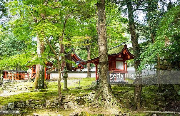 日本のスタイルの森の設定