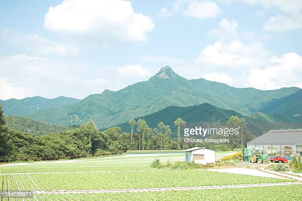 japanese summer field - non urban scene stock pictures, royalty-free photos & images