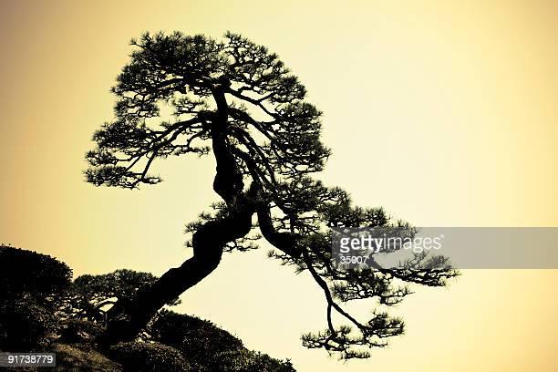 日本の木のシルエット