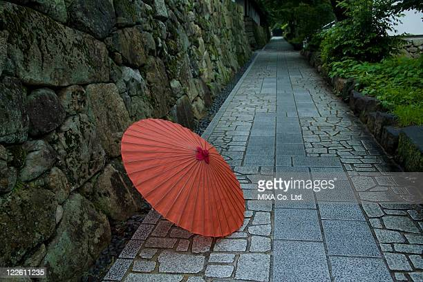 Japanese Umbrella and Hydrangea
