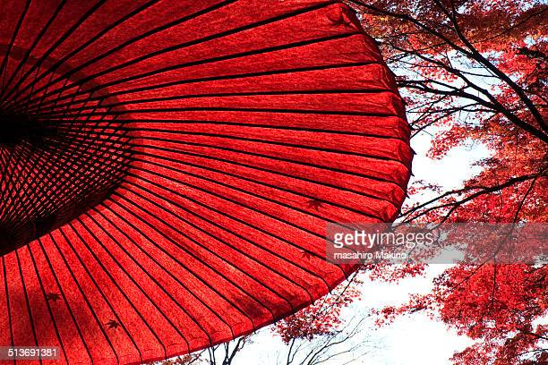 Japanese Umbrella Under Maple Tree