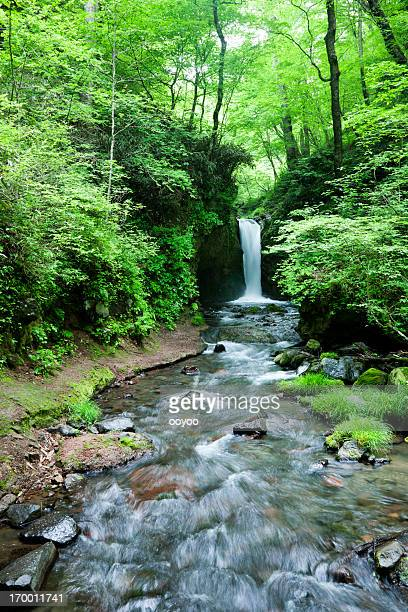 japanese waterfall - spring flowing water stock pictures, royalty-free photos & images