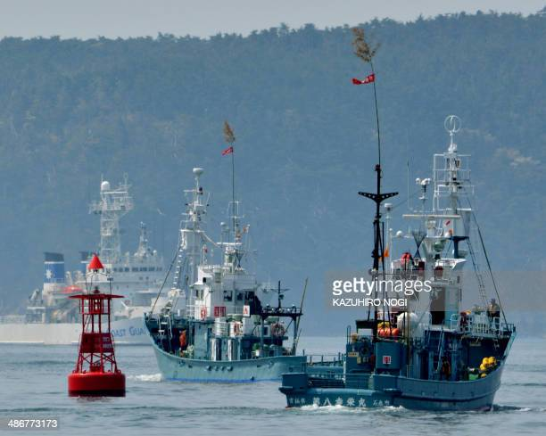 Japanese whaling fleets depart Ayukawa port in Ishinomaki City on April 26 2014 under under tight security by the Japan Coast Guard A Japanese...