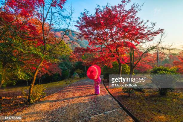 japanese woman contemplating the maples in autumn, japan - ostasien stock-fotos und bilder