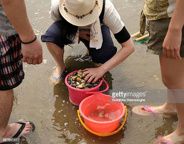 Japanese woman drains clams at Shinmaiko Beach on May 3 2014 in Himeji Japan Clam digging is one of the popular leisure activities during the Golden...