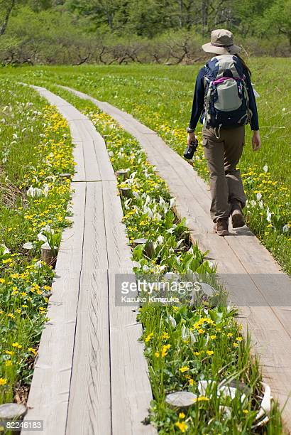 japanese woman hiking in the park - kazuko kimizuka stock-fotos und bilder