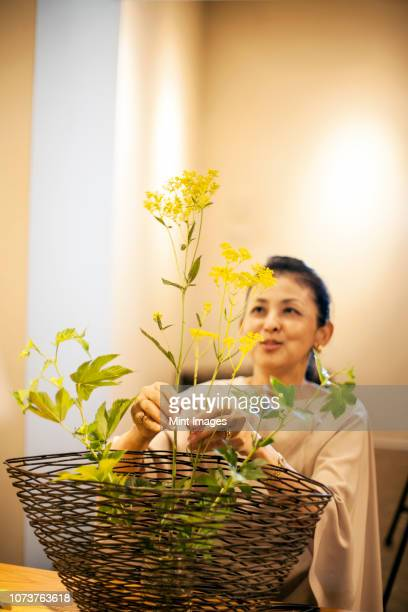 japanese woman standing in flower gallery, working on ikebana arrangement. - ikebana stock pictures, royalty-free photos & images