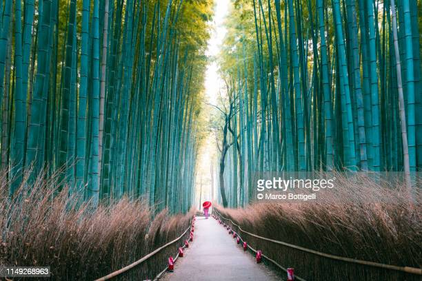 japanese woman walking in bamboo grove, arashiyama, kyoto, japan - grove_(nature) stock pictures, royalty-free photos & images