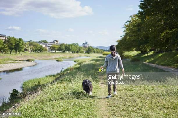una mujer japonesa caminando con perro a lo largo del lecho del río - border collie fotografías e imágenes de stock