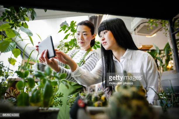 Japanese women teamwork at a flower shop
