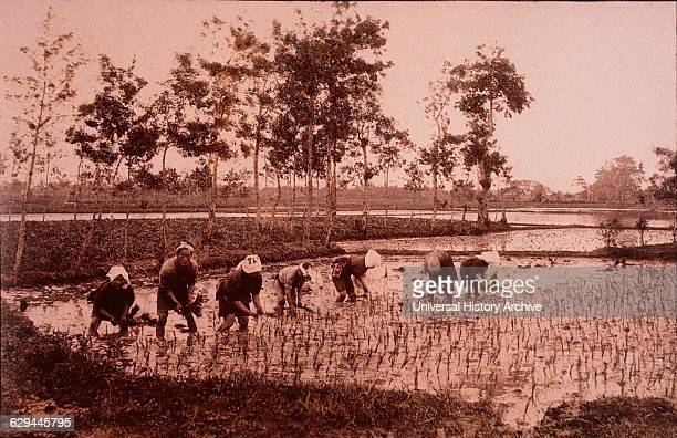 Japanese Workers Planting Rice Japan HandColored Photograph circa 1880