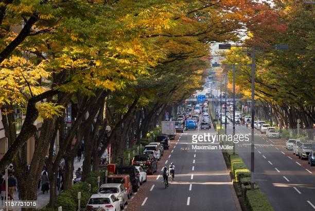 japanese zelkova trees along omotesando, shibuya, tokyo, japan - 表参道 ストックフォトと画像