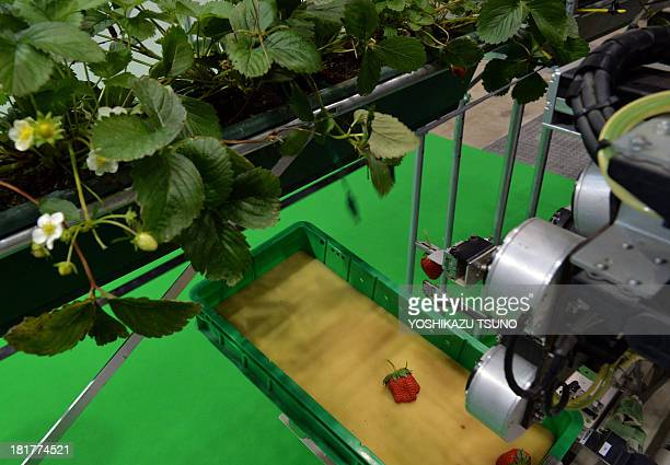 Japan's agriculture machinery maker Shibuya Seiki and National Agriculture and Food Research Organisation displays a robot to pick a ripe strawberry...