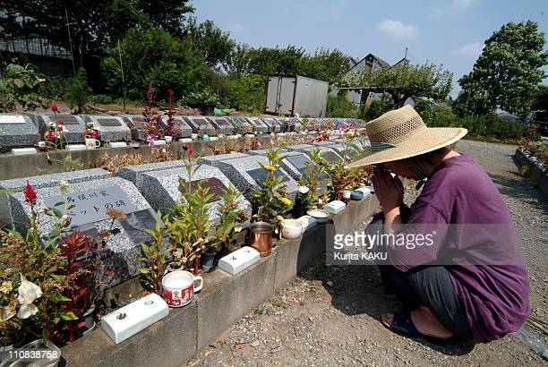 Japan'S Craze For Small Dogs In Japan In September 2004 Pet cemetery in Ichikawa Chiba which was built in 1990 is more and more customers lately...