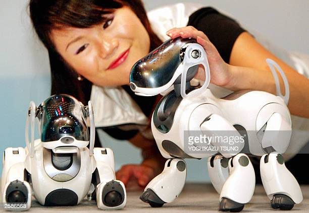 Japan''s electronics giant Sony employee Akiko Tanaka displays the new robot dogs ''AIBO ERS7'' during the press preview at the company''s showroom...