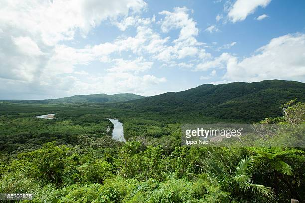 japan's largest mangrove forest, iriomote island - ippei naoi stock photos and pictures