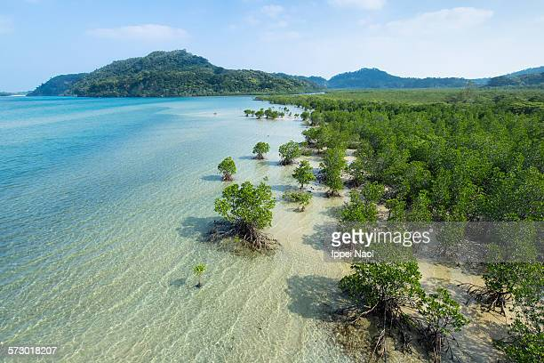 japan's longest mangrove river, iriomote island - mangrove tree stock pictures, royalty-free photos & images