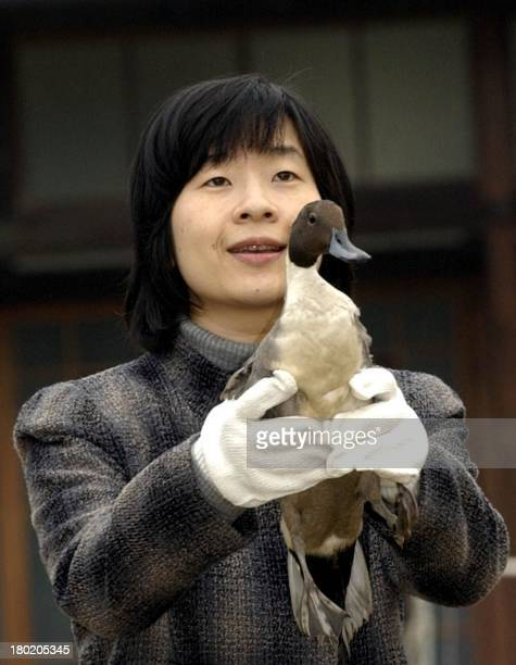 Japan's Princess Sayako holds a duck before releasing it at the imperial duck reserve where wild ducks and other birds flock every year on their...