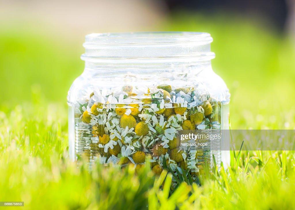Jar of chamomile flowers : Stock Photo