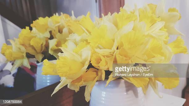 jar of daffodils reflected in mirror - bunch of flowers stock pictures, royalty-free photos & images