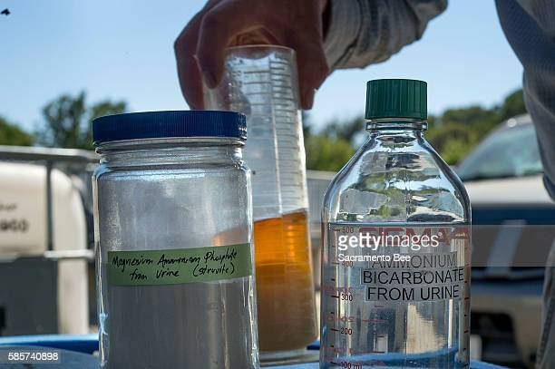 A jar of magnesium ammonium phosphate left and a jar of ammonium bicarbonate extracted from urine at the UC Davis Waste Water Treatment facility in...