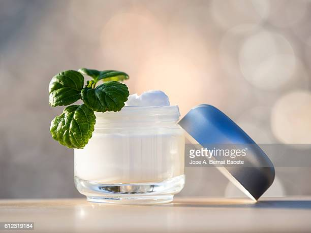 Jar of moisturizing white cream opened, with a few green leaves of plant illuminated with natural light