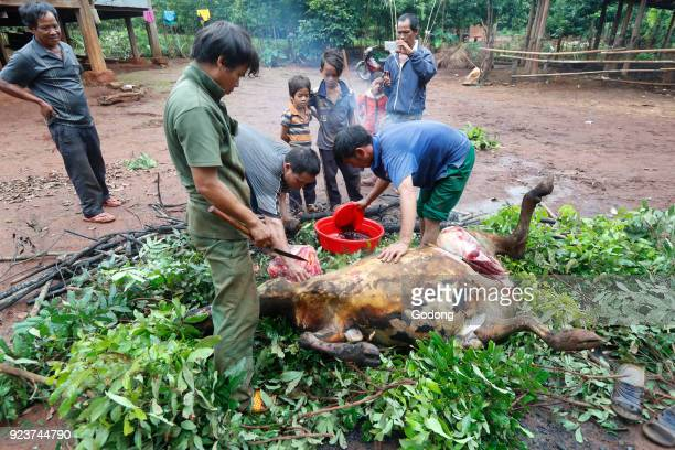 Jarai ethnic group Buffalo sacrifice for funeral rites Kon Tum Vietnam