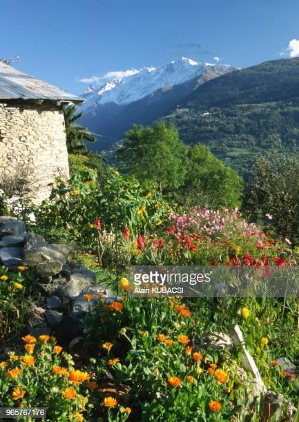 Jardin de Me Delavest Picolard Les Chapelles Versant du Soleil Beaufortin Savoie France Zinnias Glaiolus Cosmos Jardin de Me Delavest Picolard Les...