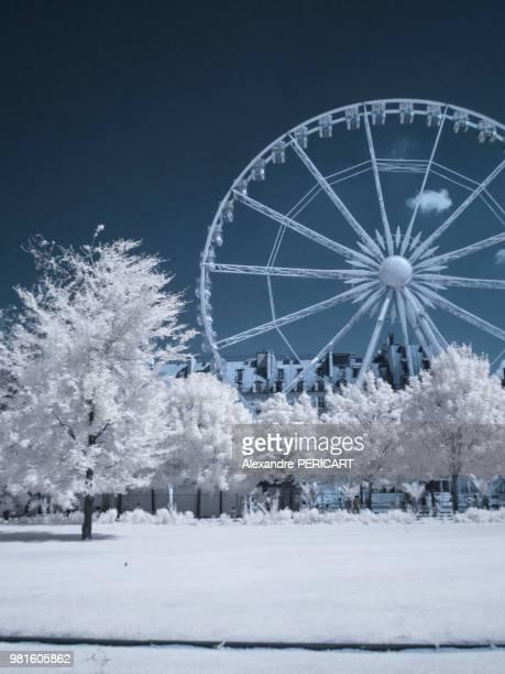 Jardin des Tuileries (in infrared)
