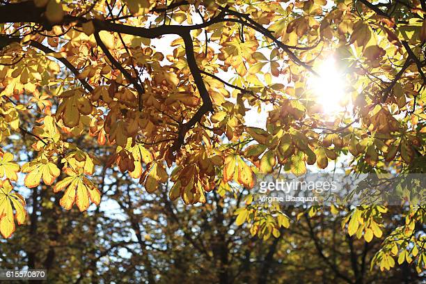 jardin du luxembourg. luxembourg garden. paris. 16 october 2016 - gratis - fotografias e filmes do acervo