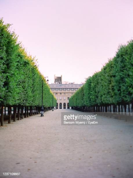 jardin du palais royal - palais royal stock pictures, royalty-free photos & images