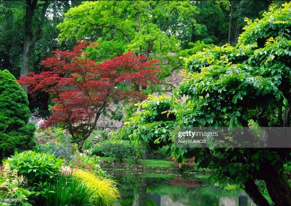 jardin japonais parc de courances essonne france acer japonica photo d 39 actualit getty. Black Bedroom Furniture Sets. Home Design Ideas